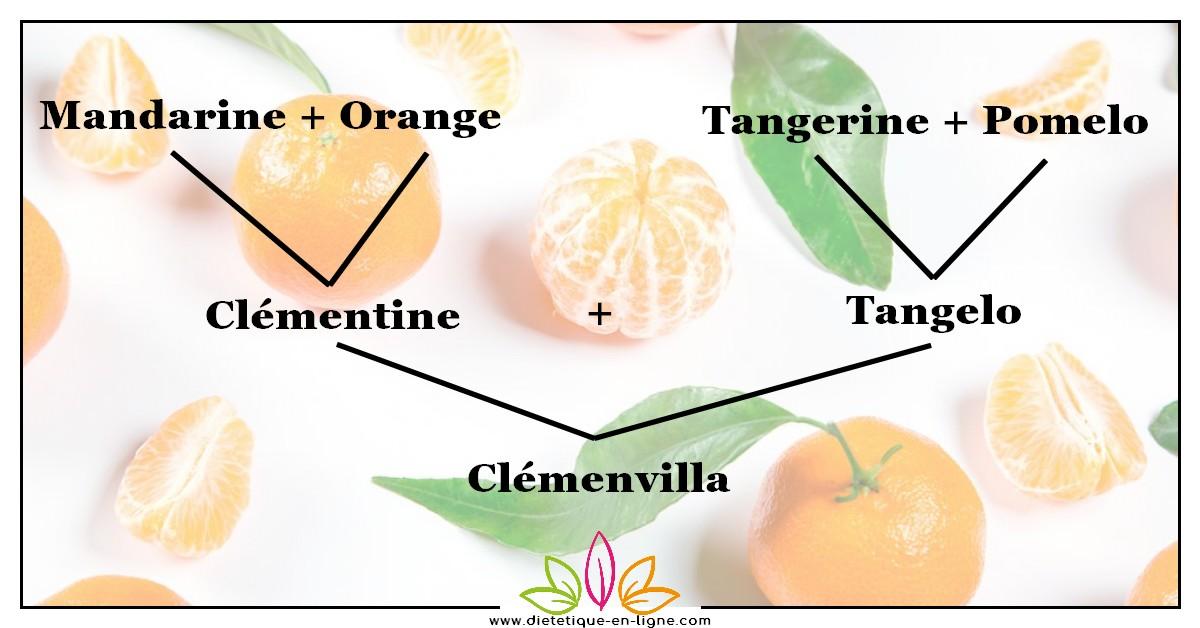 Clémentine Saison et Calories : mandarine et orange